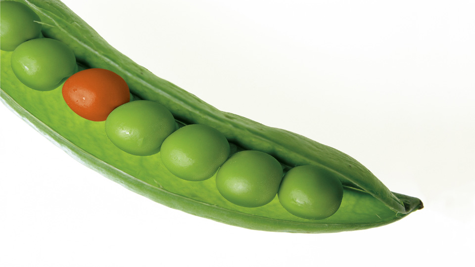Orange pea in green pod